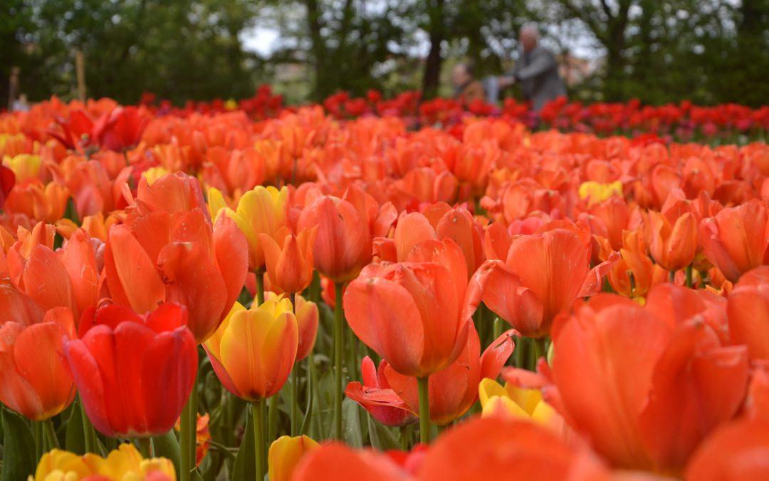 Messer Tulipano 2019 torna al Castello di Pralormo