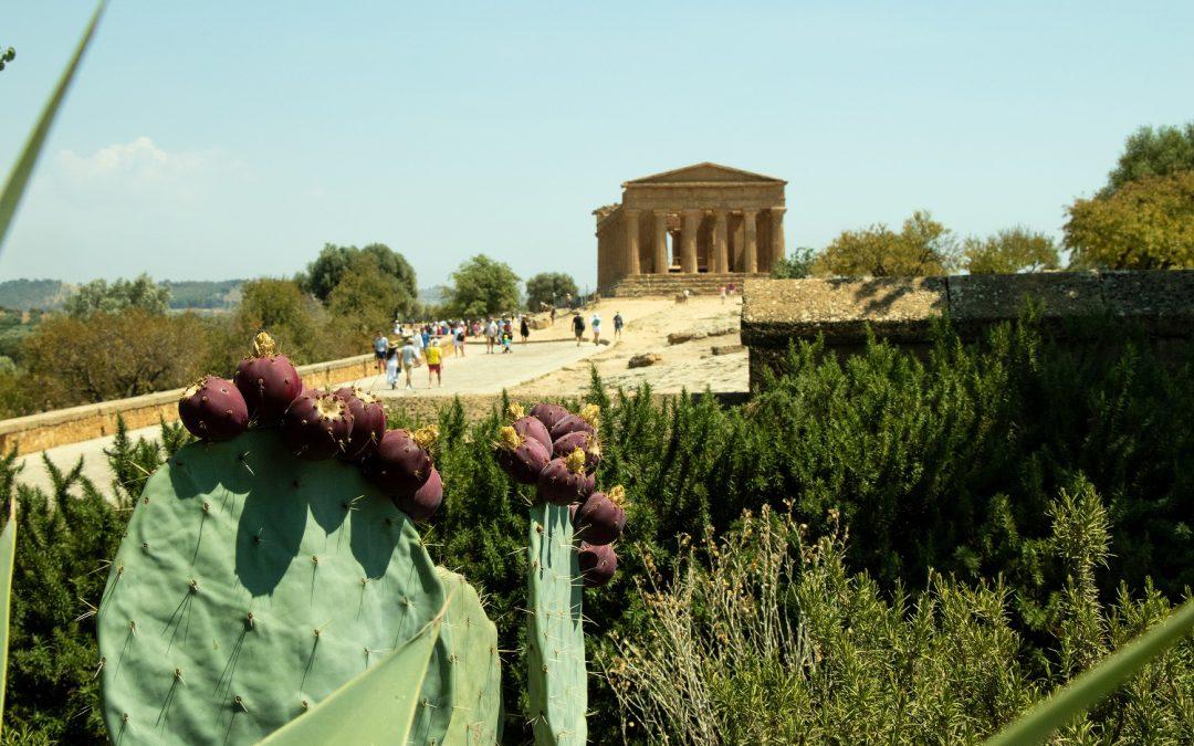 Riapre ad Agrigento lo splendido giardino di Villa Aurea